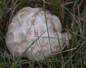 Large mushroom-5-26-16