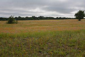 Main-grass-gaillardia-5-26-16