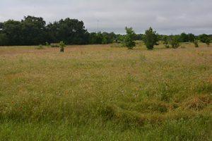 Near-meadow-5-26-16